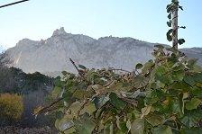 На Кореизской плантации приступают к обрезке экзотической лианы киви, фото-3