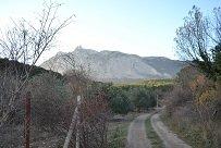 На Кореизской плантации приступают к обрезке экзотической лианы киви, фото-2