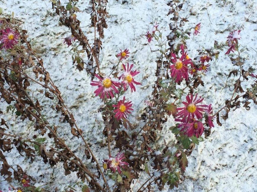 Первый снег в Мариуполе  порадовал с утра, но уже успел растаять (ФОТО), фото-3