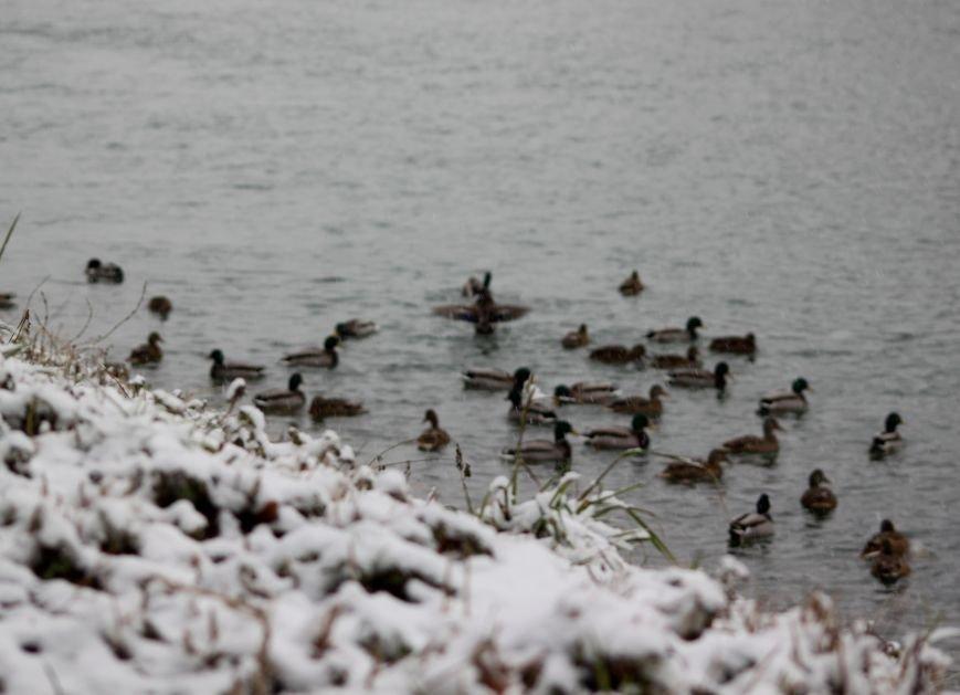В Ужгород йде сильний сніг, фото-20