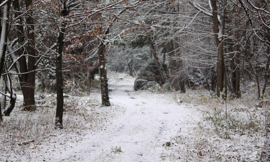 В Ужгород йде сильний сніг, фото-4