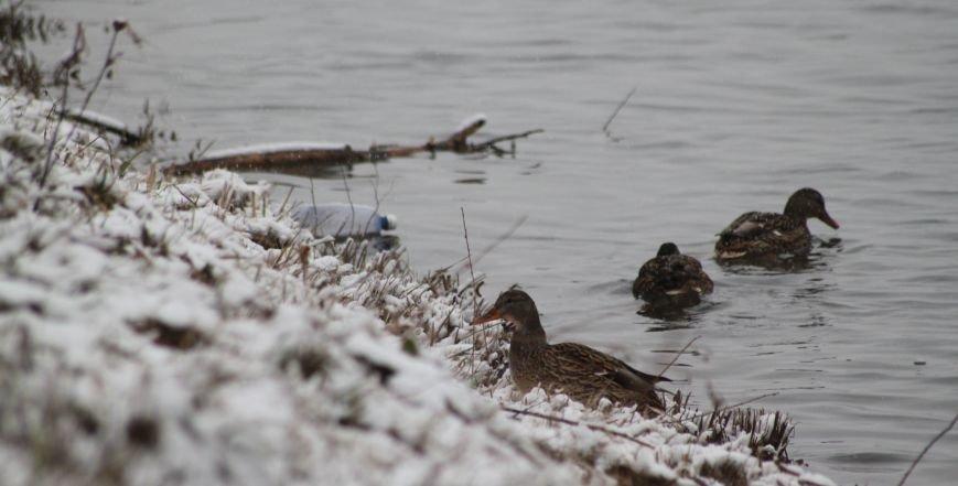 В Ужгород йде сильний сніг, фото-16