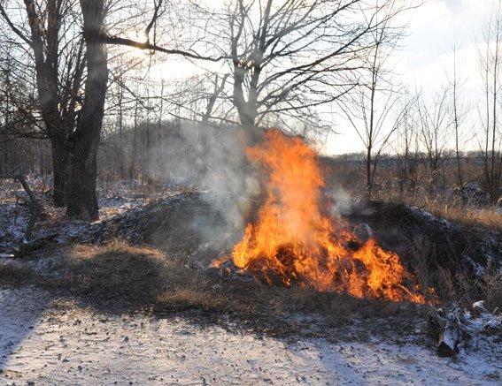 На Полтавщине сожгли более ста килограмм наркотиков, фото-1