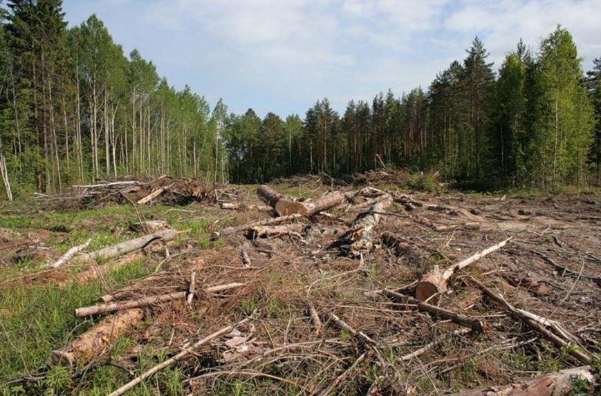вирубка_лісу_карпати