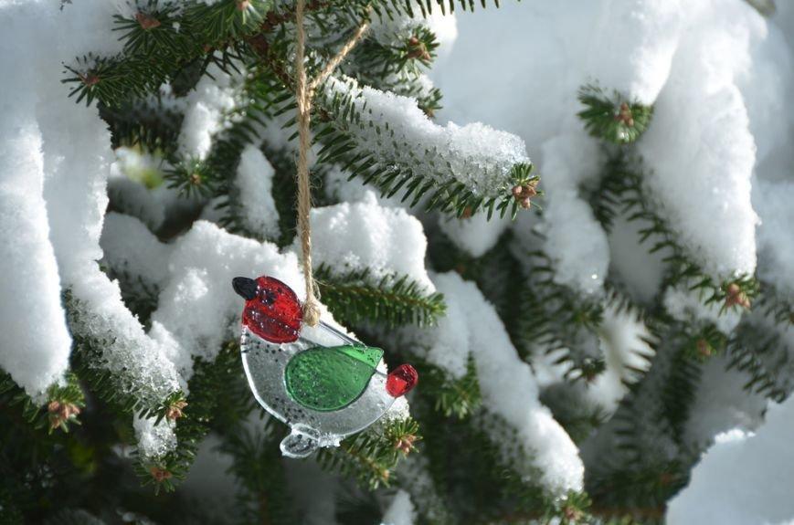 Рождественские ели Никитского сада. Их здесь 20 видов, фото-2
