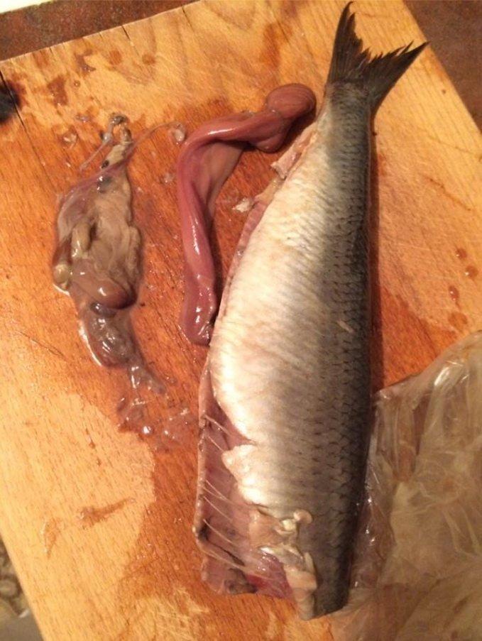 Тернополянці продали рибу з глистами (Фото), фото-1