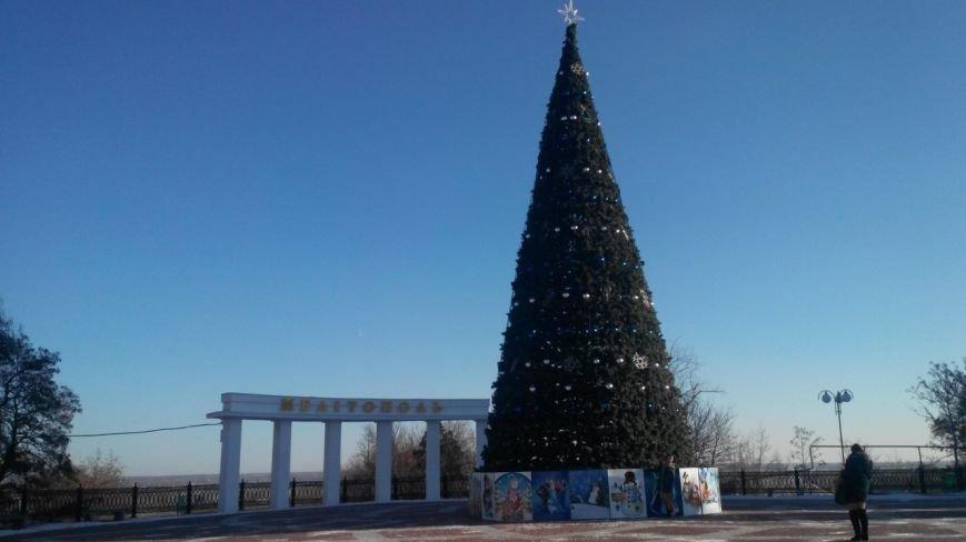 Горожане делают первые селфи на фоне главной елки (фото), фото-3