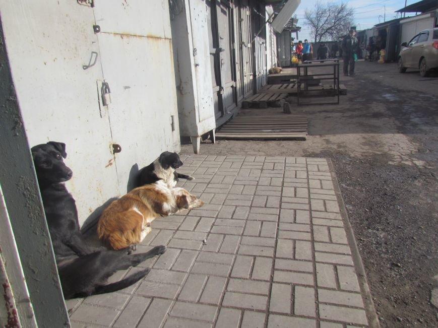 Ремонтом  старейшего рынка в Мариуполе займутся, когда закончится война (ФОТО, ВИДЕО), фото-7