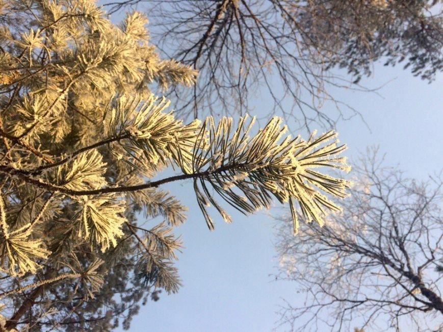 Мороз и солнце – день чудесный! Вартовчане восхищаются зимой, фото-5