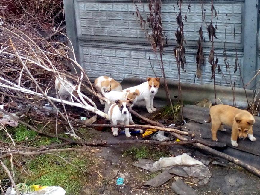 Чтобы спасти бродячих собак от отлова, горожане ищут им хозяев (фото), фото-1