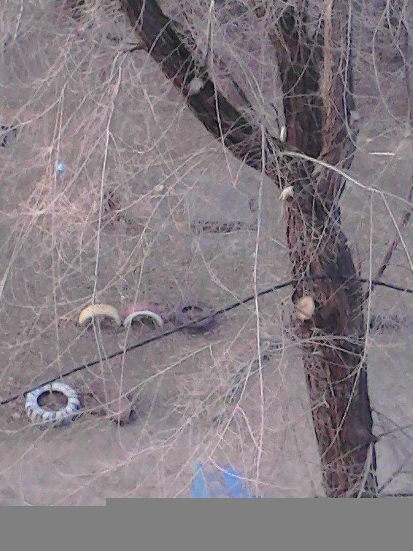 """""""Подвал затоплен стоками, кабель висит на деревьях, а возле дома укладывают плиточку"""", - криворожане """"кричат"""" о наболевшем (ФОТО), фото-3"""