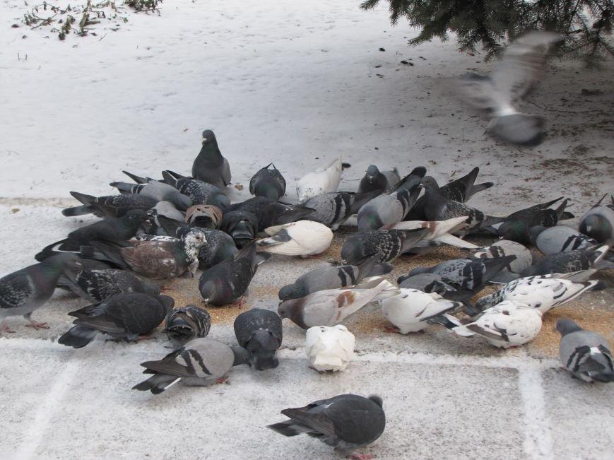 Мелитопольскому парку дадут новую жизнь (фото, видео), фото-10