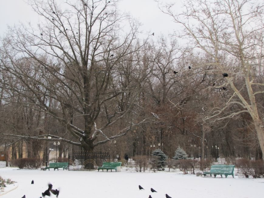 Мелитопольскому парку дадут новую жизнь (фото, видео), фото-16