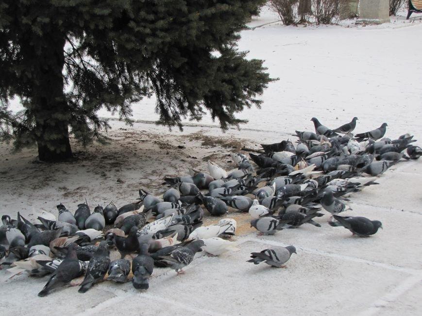 Мелитопольскому парку дадут новую жизнь (фото, видео), фото-11