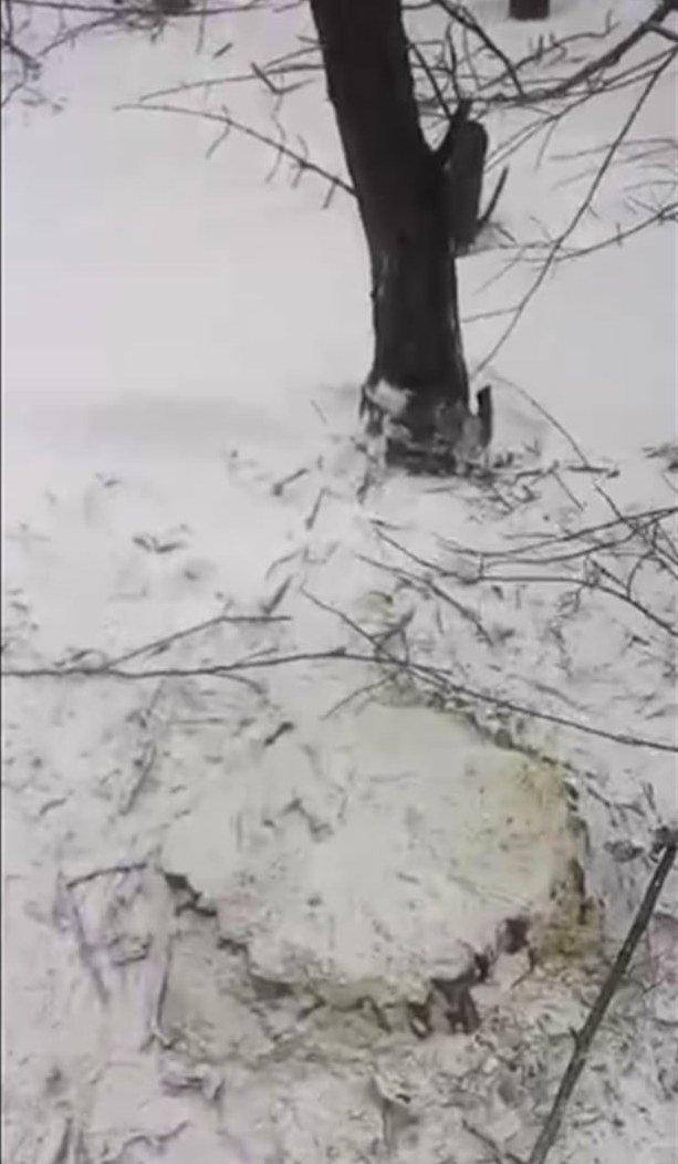 деревья7