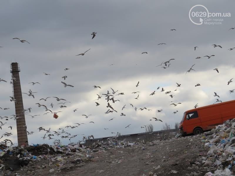 В Мариуполе опасные бытовые отходы попадают на городской полигон (ФОТО), фото-1