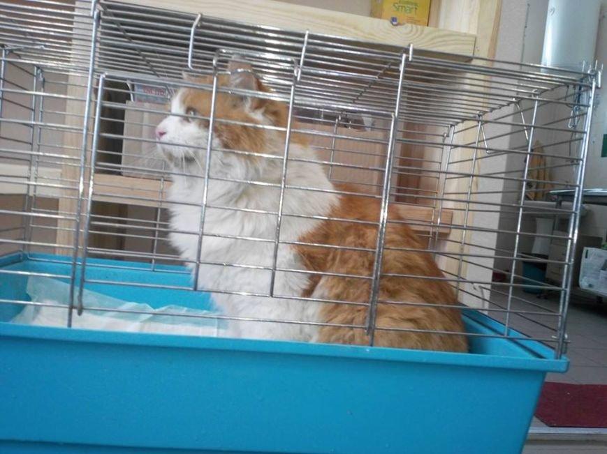 В чернівецькому притулку для тварин завівся 6-кілограмовий кіт, фото-1