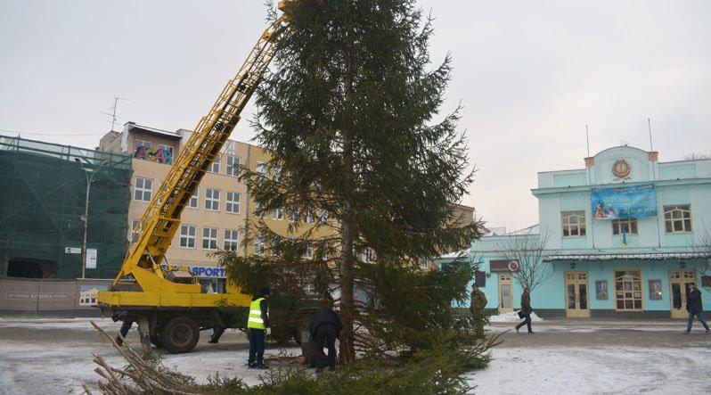 """""""Живу"""" 13-метрову ялинку на Театральній в Ужгороді прикрасять жовтогарячими іграшками: фото, фото-3"""