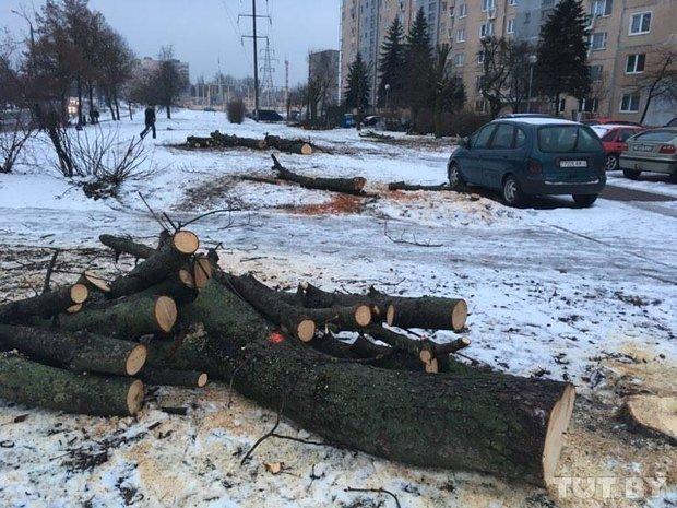 spilennye_derevya_solomovoy_grodno_1 - копия