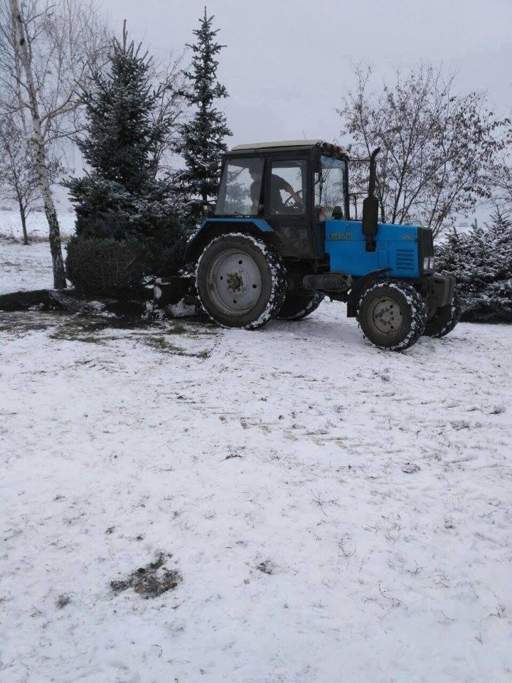 """Криворожане не дали чиновникам выкопать голубую ель """"для пересадки"""" (ФОТО), фото-8"""