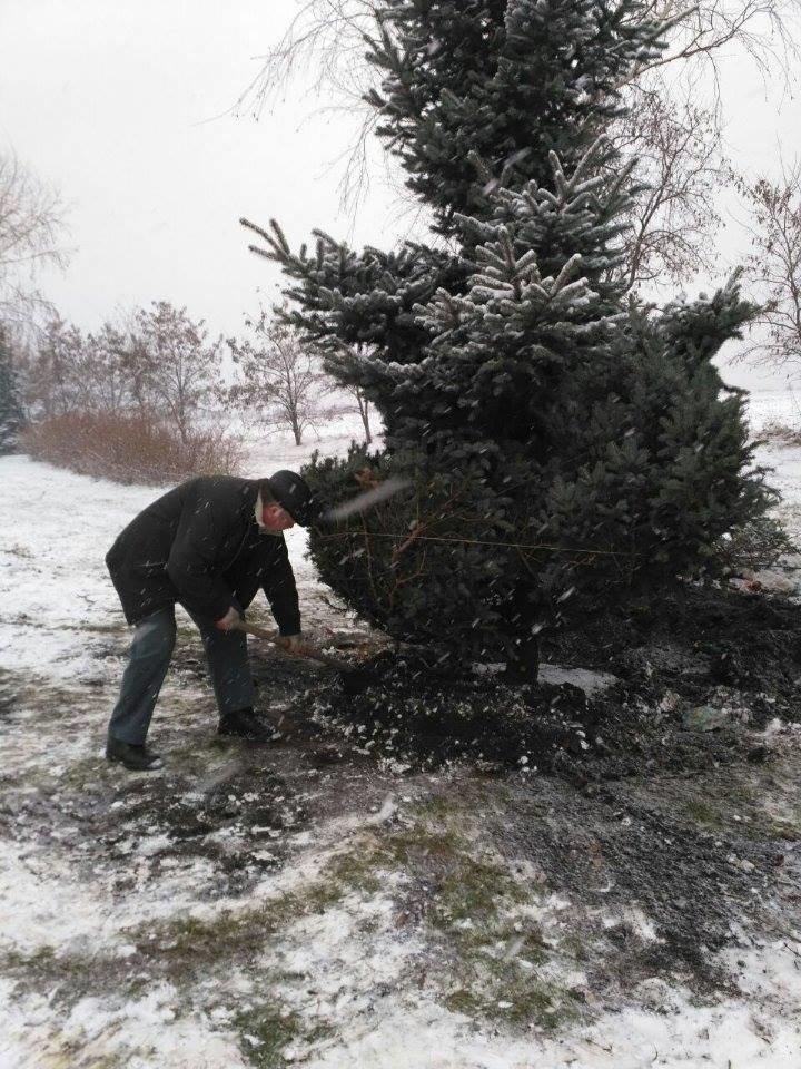 """Криворожане не дали чиновникам выкопать голубую ель """"для пересадки"""" (ФОТО), фото-6"""