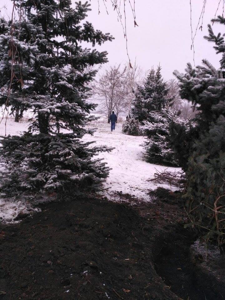 """Криворожане не дали чиновникам выкопать голубую ель """"для пересадки"""" (ФОТО), фото-4"""