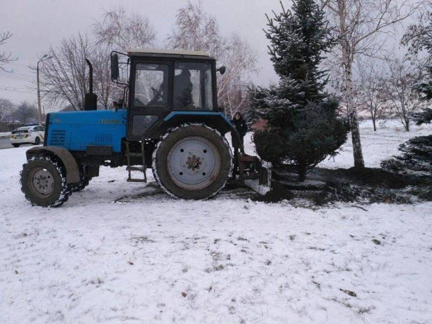 """Криворожане не дали чиновникам выкопать голубую ель """"для пересадки"""" (ФОТО), фото-7"""