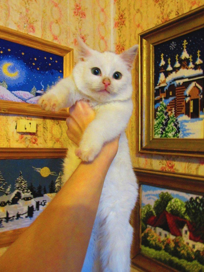 В Мелитополе появилось животное, претендующее на звание звезды Интернета (фото), фото-2