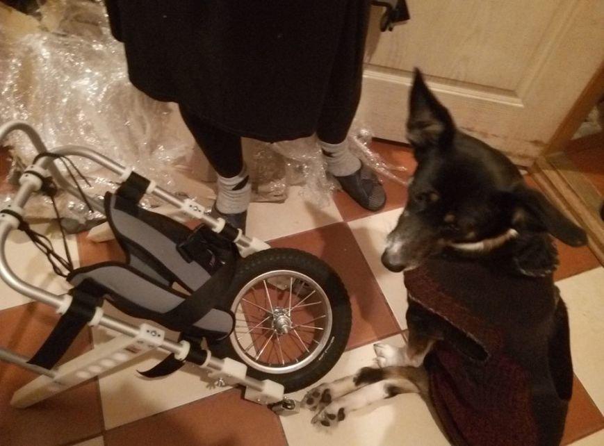 Собака, в которую стреляли из ружья, получила инвалидную коляску (фото), фото-1