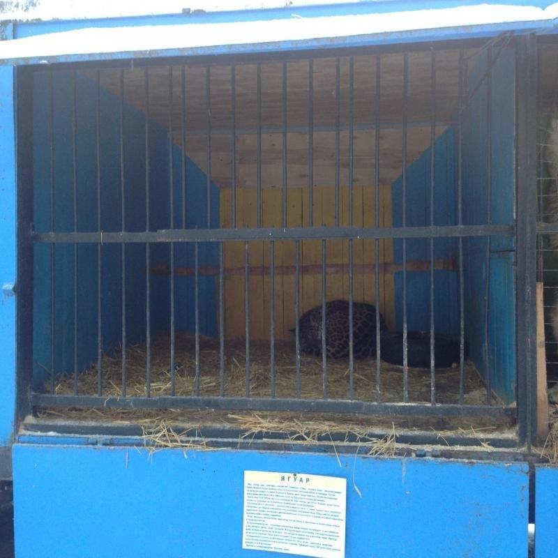 Передвижной зоопарк в Ульяновск: над животными снова издеваются. ФОТО, фото-2