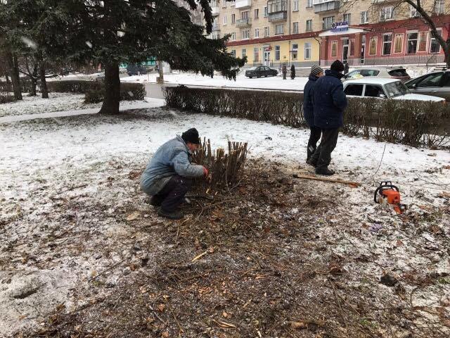 Тернополяни обурені, що на вул. Миру, щоб встановити новорічну ялинку, спилюють кущі (Фото), фото-1