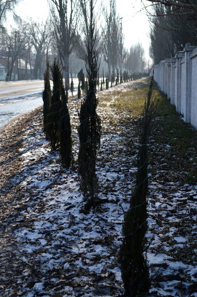 В Доброполье продолжают озеленять улицы, фото-1