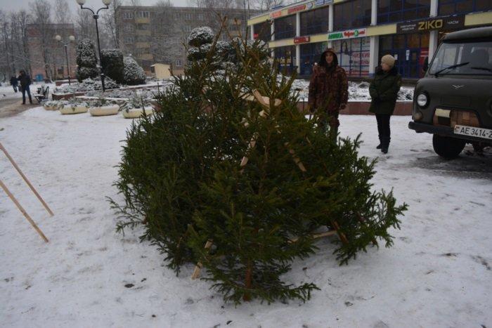 В Новополоцке начали работать елочные базары. ФОТО, фото-4