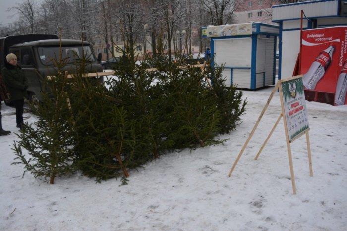 В Новополоцке начали работать елочные базары. ФОТО, фото-1