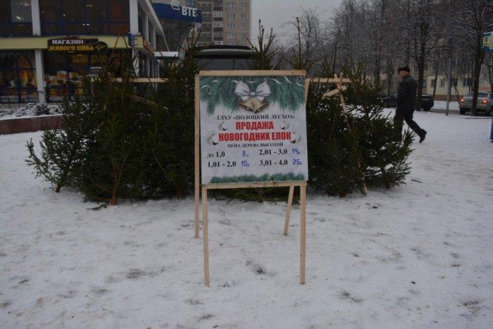 В Новополоцке начали работать елочные базары. ФОТО, фото-2