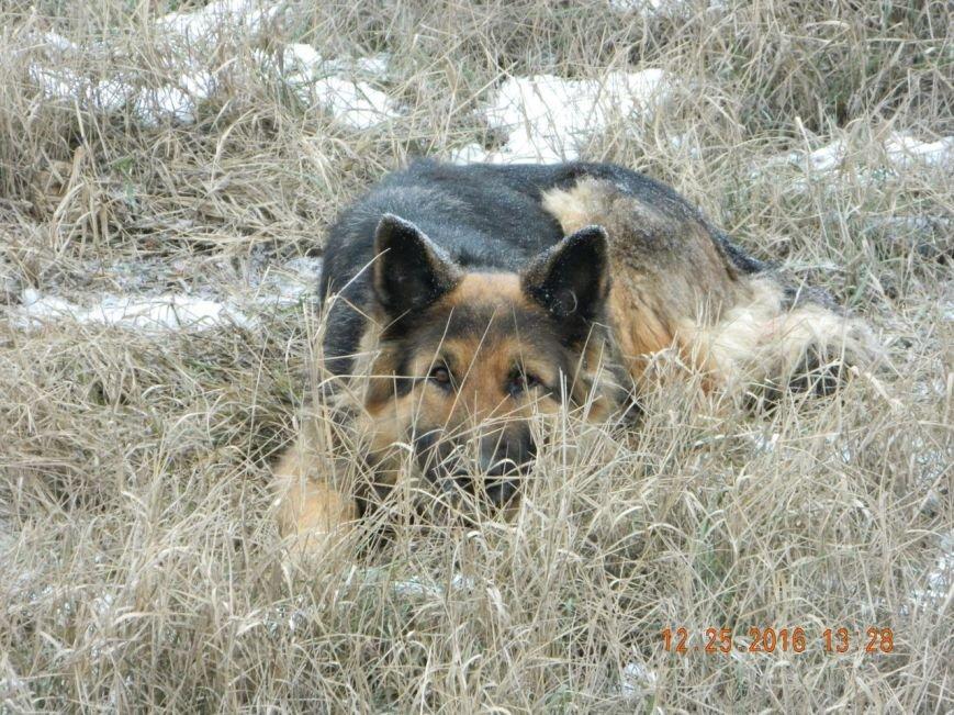 Под Мелитополем на проезжей части замерзает овчарка (фото), фото-1