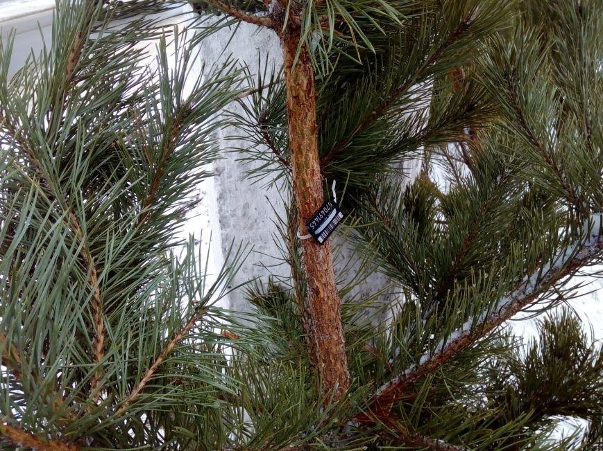 Конотопська поліція попереджає: незаконна вирубка лісових насаджень карається Законом (ФОТО), фото-1