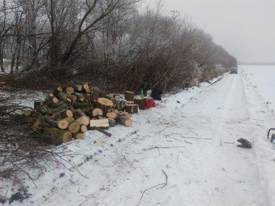 Правонарушителей могут лишить свободы на шесть месяцев за незаконную вырубку леса на Полтавщине, фото-1