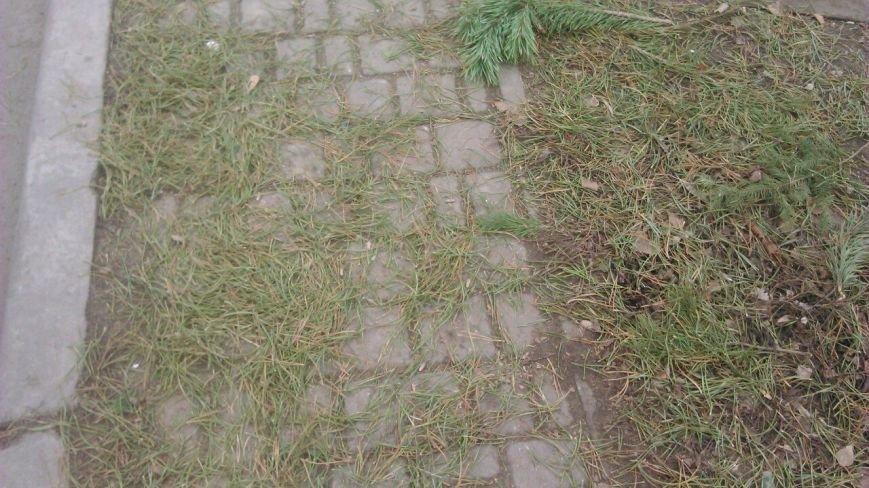 Торговцы побросали елочные базары: одесситы растаскивают сосны бесплатно (ФОТО), фото-5