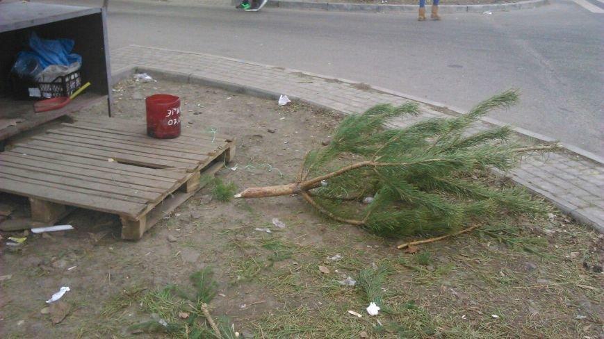 Торговцы побросали елочные базары: одесситы растаскивают сосны бесплатно (ФОТО), фото-10