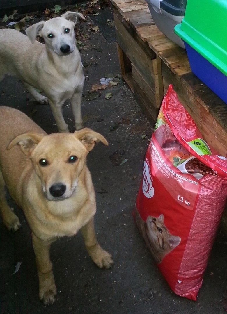 5 запорожских котов и собак, которые ищут дом, - ФОТО, фото-8