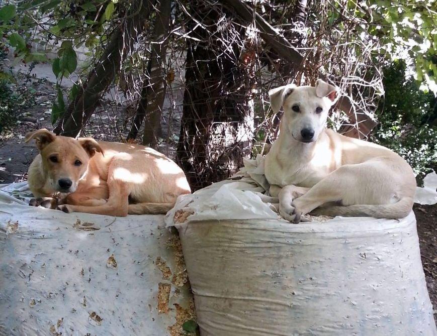 5 запорожских котов и собак, которые ищут дом, - ФОТО, фото-7