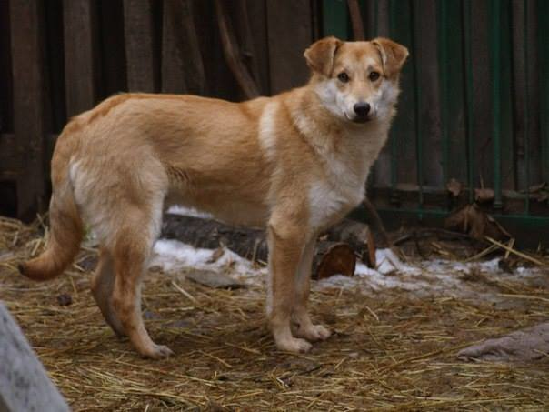 5 запорожских котов и собак, которые ищут дом, - ФОТО, фото-10