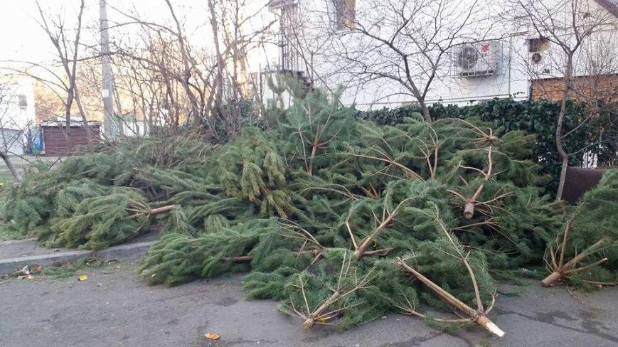 В лесу родилась елочка: сотни непроданных сосен бросили на улицах (ФОТО), фото-1