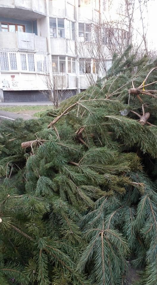 В лесу родилась елочка: сотни непроданных сосен бросили на улицах (ФОТО), фото-2