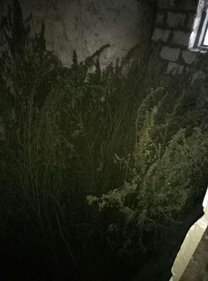 Харьковские полицейские нашли у мужчины дома почти полсотни килограмм конопли (ФОТО), фото-2