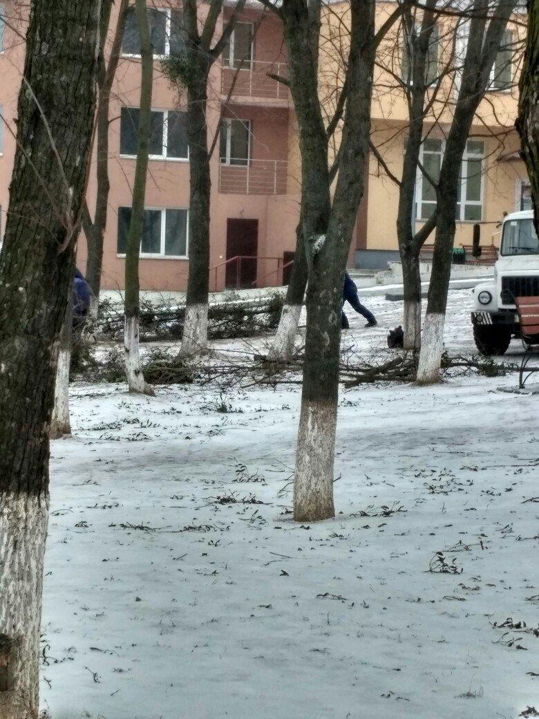 ФОТОФАКТ: обрезка деревьев в Вишневом, фото-3
