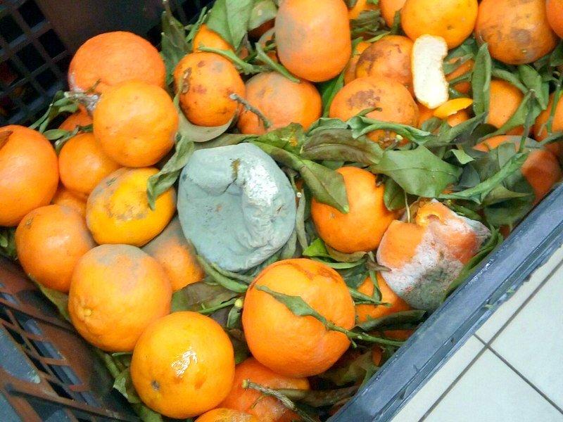 Гнилые мандарины на прилавке шокировали одесситов (ФОТО), фото-1