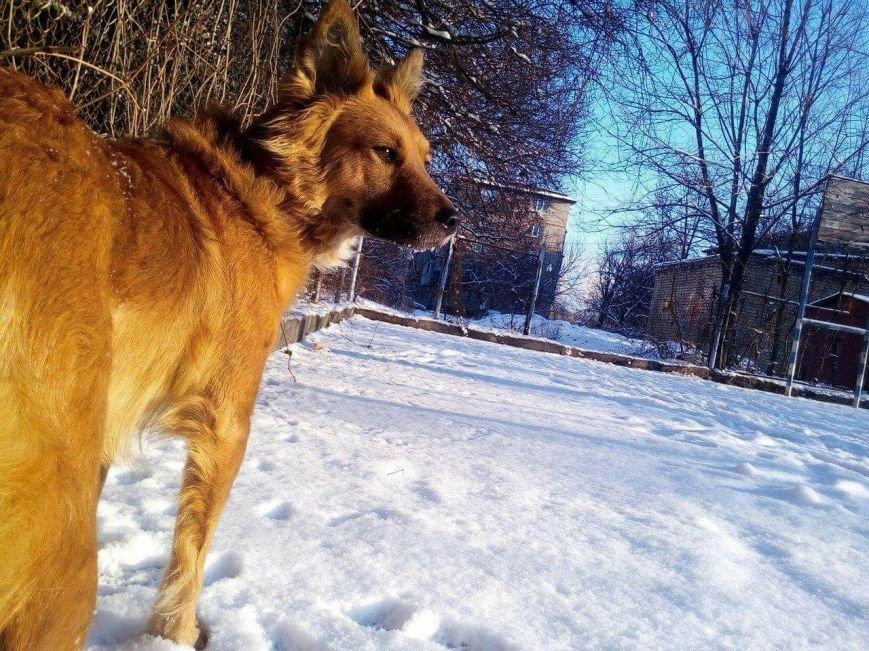В Запорожье ищут собаку, которая испугалась салютов и убежала, - ФОТО, фото-1