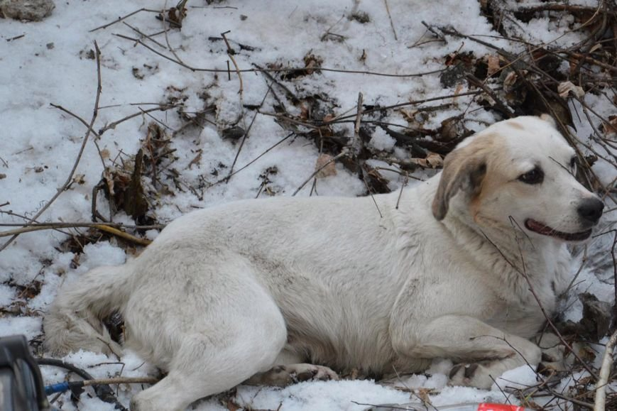 В Днепре спасли застрявшую на глубине двух метров собаку (ФОТО), фото-4